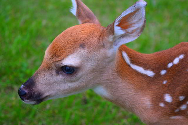image for How To Enroll A Newborn Child In DEERS